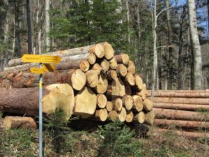 Regionales Holz für Passareco