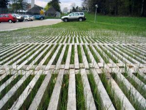 L'herbe pousse à travers les lattes de bois