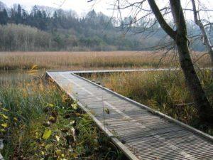 Holzpasserelle Naturschutzgebiet