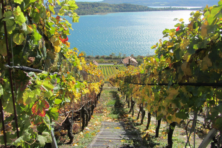 ecotrail pour la biodiversité et l'écologie dans les vignes