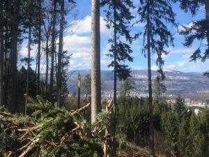 Wald im Seeland nach Burglind Sturm