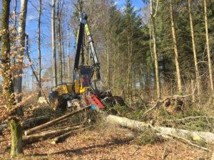 Holzschlag im Wald für Passareco