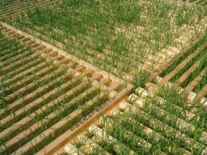 ecoplate Holzroste von Passareco mit durchwachsendem Gras