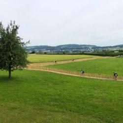 Der Naturweg von Gemeinde Seegräben zur Juckerfarm mit ecopark Holzrosten von Passareco - Baum linkerhand. Fussgänger auf dem von einem Holzzaun umsäumten Fussweg. Sicht bis zum Obstlabyrinth Juckerfarm.